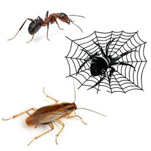 Средства от тараканов, муравьев, пауков