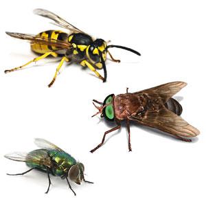 Ловушки мух, слепней, ос
